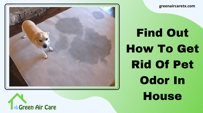 Find Out How To Get Rid Of Pet Odor In House