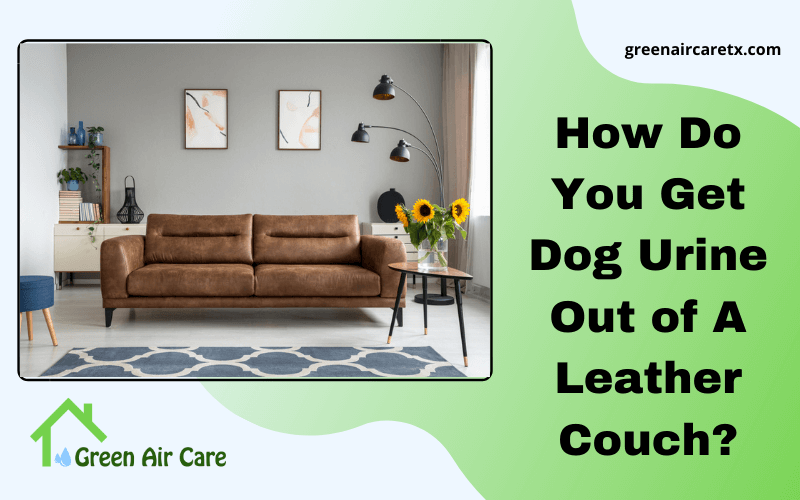 How Do You Get Dog Urine Out of A Leather Couch